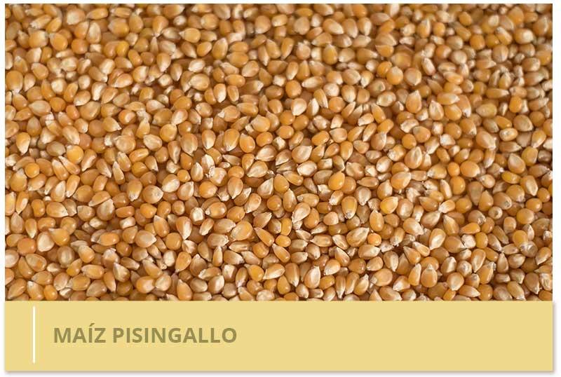 maiz pisingallo